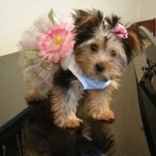 Pet Care Provider Dianna C Gallery Image 1