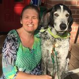 Pet Sitting in your home, Drop In's and Dog Walker