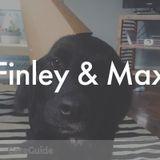 Dog Walker, Pet Sitter, Kennel in Nashville
