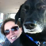 Pet Sitter Job in Yuma