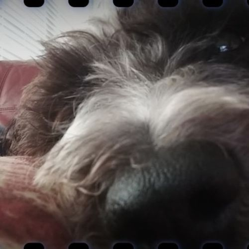 Pet Care Provider James R's Profile Picture