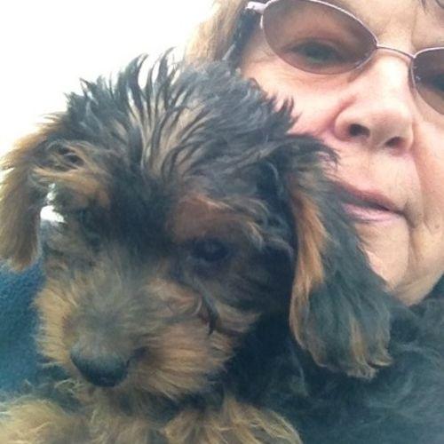 Pet Care Provider Dianne L's Profile Picture