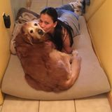 Available: Talented Dog Sitter in Jackson, New Jersey