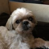 I am looking for overnight care for my shihtzu.