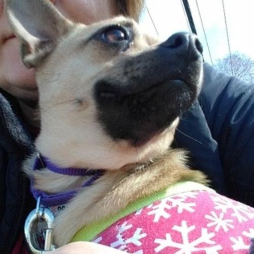 Pet Care Provider Galina B Gallery Image 3