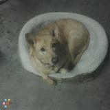 Dog Walker, Pet Sitter in Pleasanton