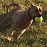 Kenosha, Wisconsin Dog Sitting Professional