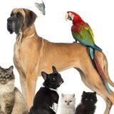 Pet sitter/housesitter
