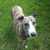 Dog Walker, Pet Sitter in Aiken