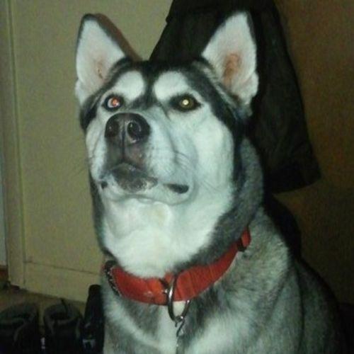 Hi I'm Helena and im a Phoenix, New York Dog Walker