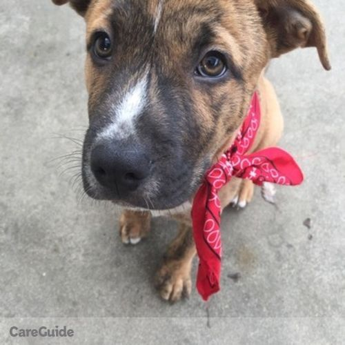 Pet Care Provider Emily Moore's Profile Picture