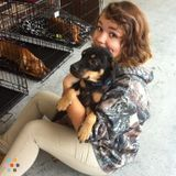 Dog Walker, Pet Sitter in Saint Augustine