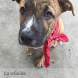 Dog Walker, Pet Sitter in Sacramento