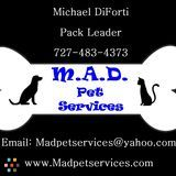 Dog Walker, Pet Sitter in Port Richey