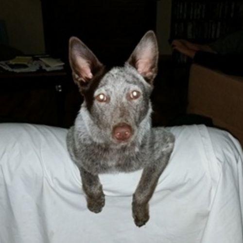 Pet Care Provider Kari Adair Gallery Image 1