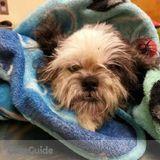 Dog Walker, Pet Sitter in Fairfax