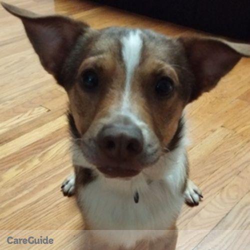 Pet Care Provider Thao Tran's Profile Picture