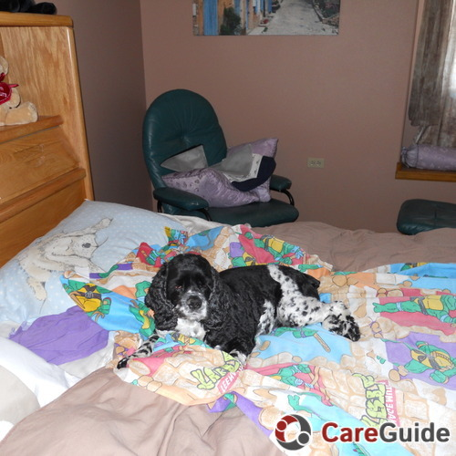 Pet Care Job Carolyn Sklovengill's Profile Picture