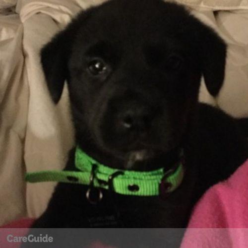 Pet Care Provider Corie McAnally's Profile Picture