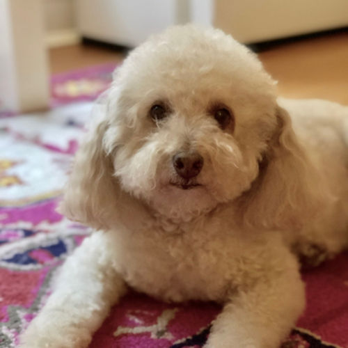 Pet Care Job Eve M's Profile Picture