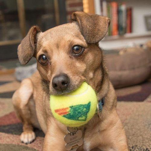 Pet Care Provider Linda D Gallery Image 1
