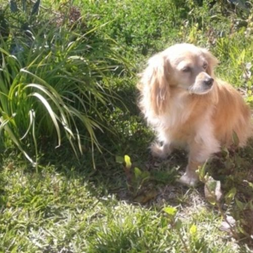 Pet Care Provider Aimee Moreno Gallery Image 3