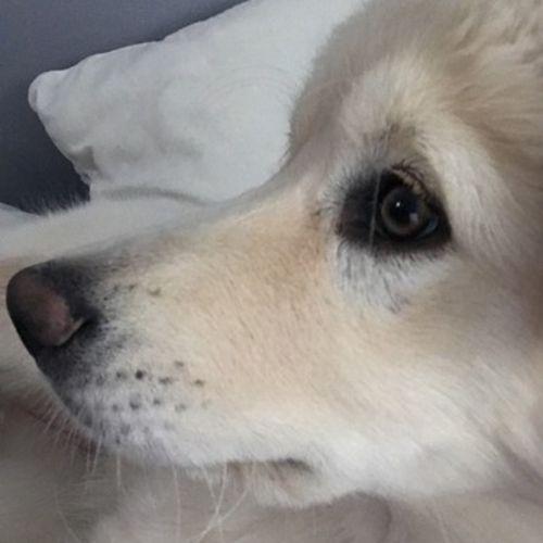 Pet Care Job Sandra Garcia's Profile Picture