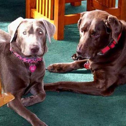 Pet Care Provider Robin B's Profile Picture