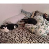 Loving and Caring Petsitter