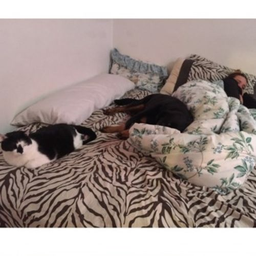 Pet Care Provider Amanda Harvey's Profile Picture