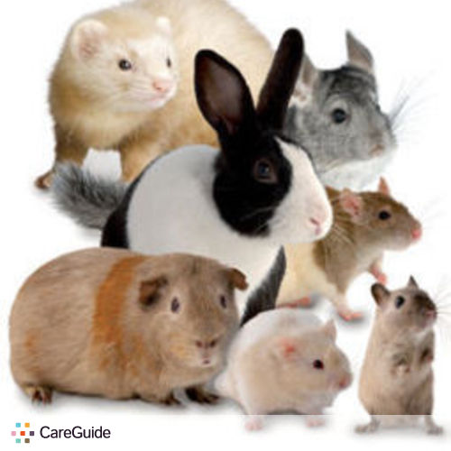 Pet Care Provider Melanie H's Profile Picture