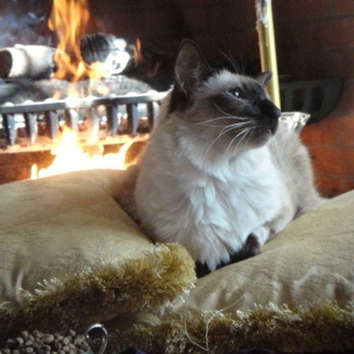 Pet Care Provider Sydney Cerqueira's Profile Picture