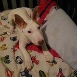 Dog Walker, Pet Sitter, Kennel in Corpus Christi