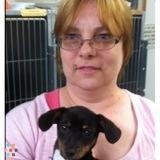Dog Walker, Pet Sitter in Carmichael