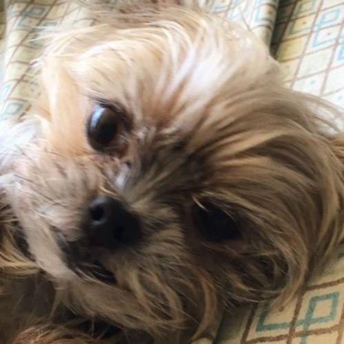 Pet Care Provider Sarah R's Profile Picture