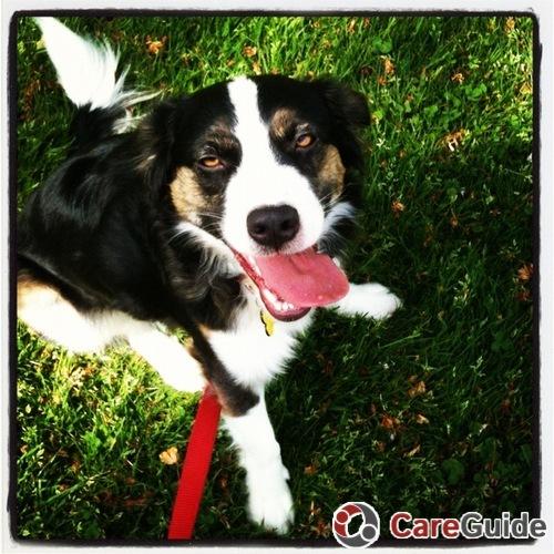 Pet Care Provider Tina Smith's Profile Picture