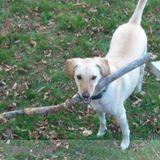 Dog Walker, Pet Sitter in Melrose