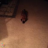 Dog Walker, Pet Sitter in Clayton