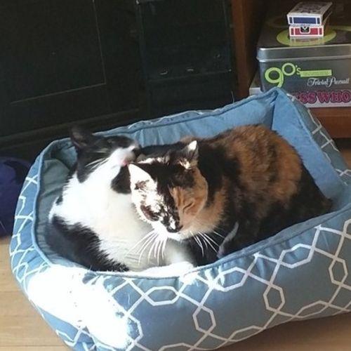 Pet Care Job Carey B's Profile Picture