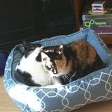 Pet Sitter Needed For 2 Kitties