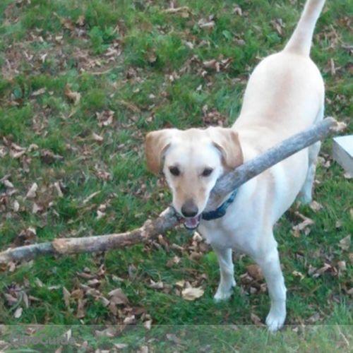 Pet Care Provider Kristen Mullen's Profile Picture