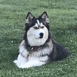 Job Posting: I need Ossian Pet Service Provider