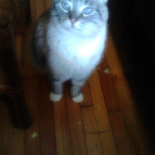 House Sitter Provider Gladys E's Profile Picture