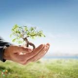 Airdrie Landscape Management