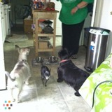Dog Walker, Pet Sitter in Irving