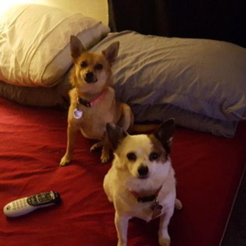 Pet Care Provider Gregory B's Profile Picture