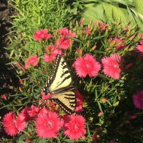 Gardener Provider Marianne G Gallery Image 1