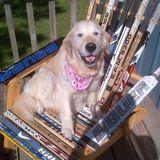 Dog Walker, Pet Sitter in Lindsay