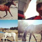 Pet care Pro: horses, dogs, cats, rabbits and farm animals!