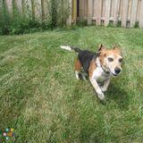 April the Pet Care Provider